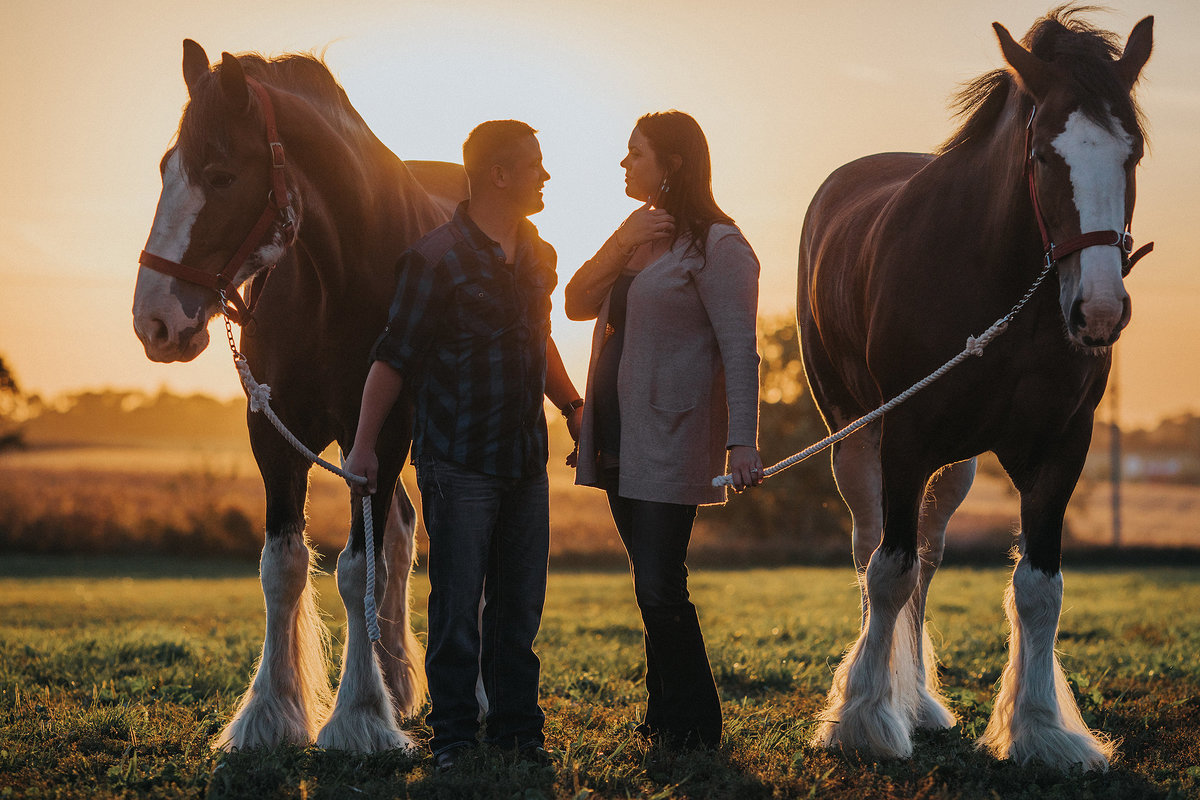 guy and girl with clydesdale horses during their engagement photography session