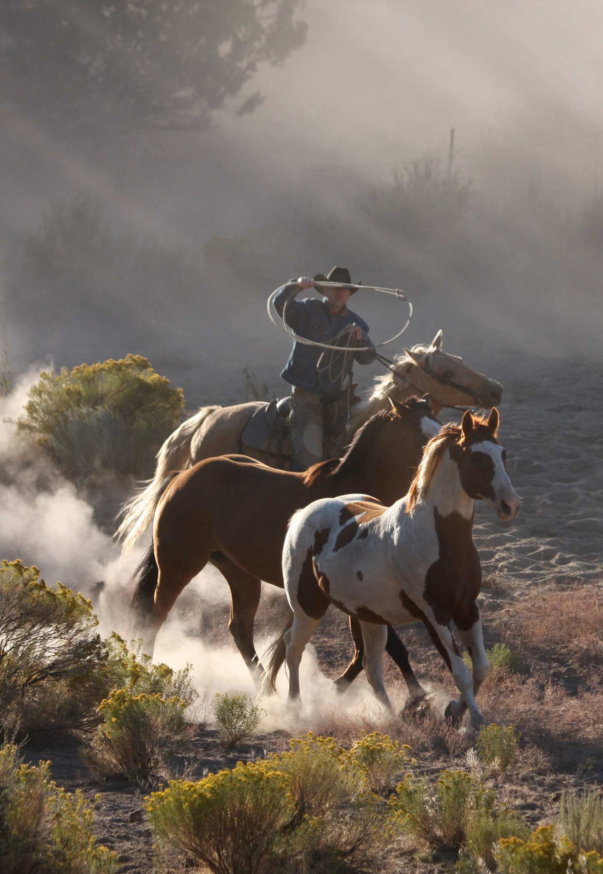 cowboy and horse photographer wenatchee  Lynette Smith Photography