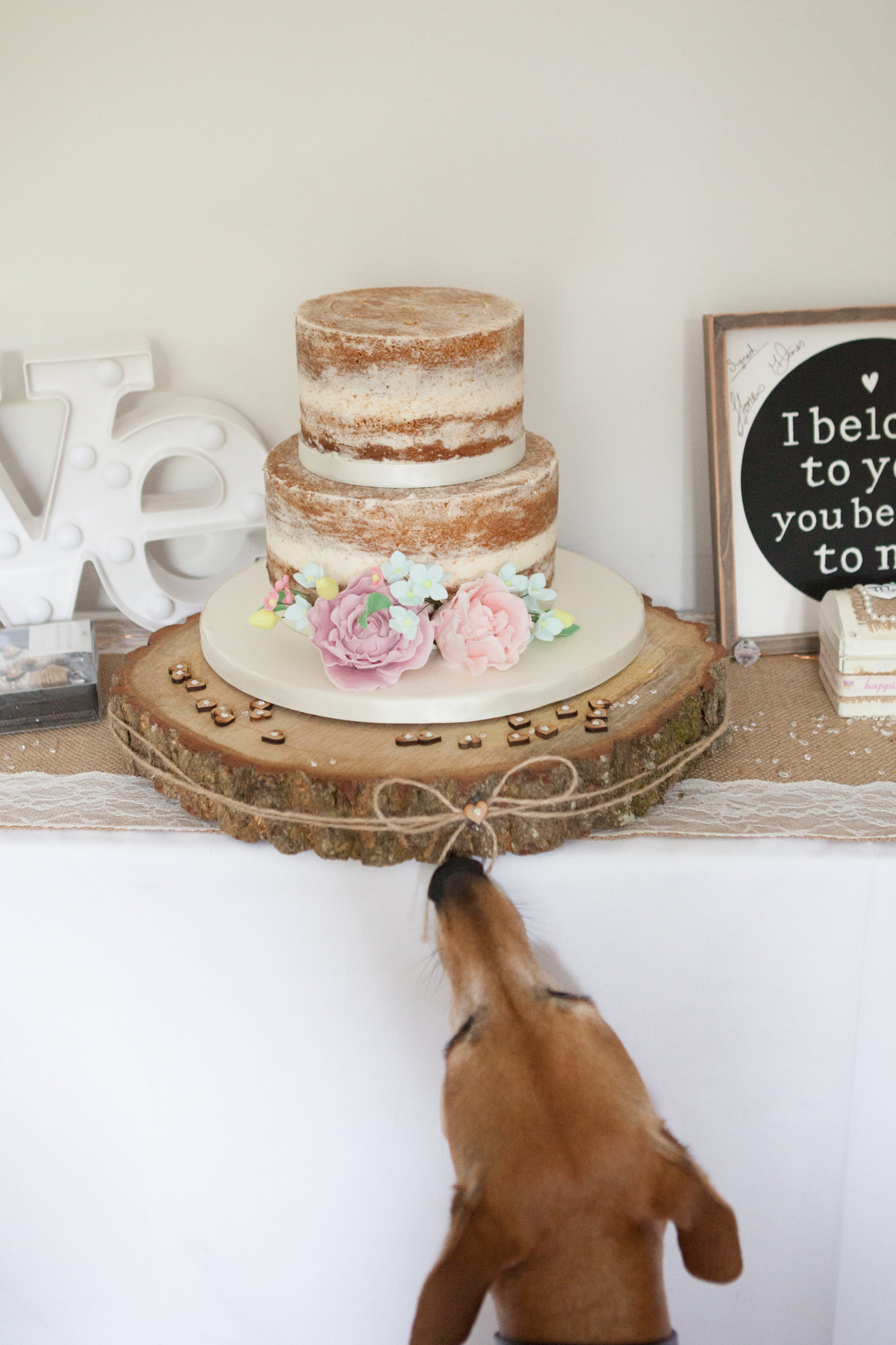 wedding cake, dog