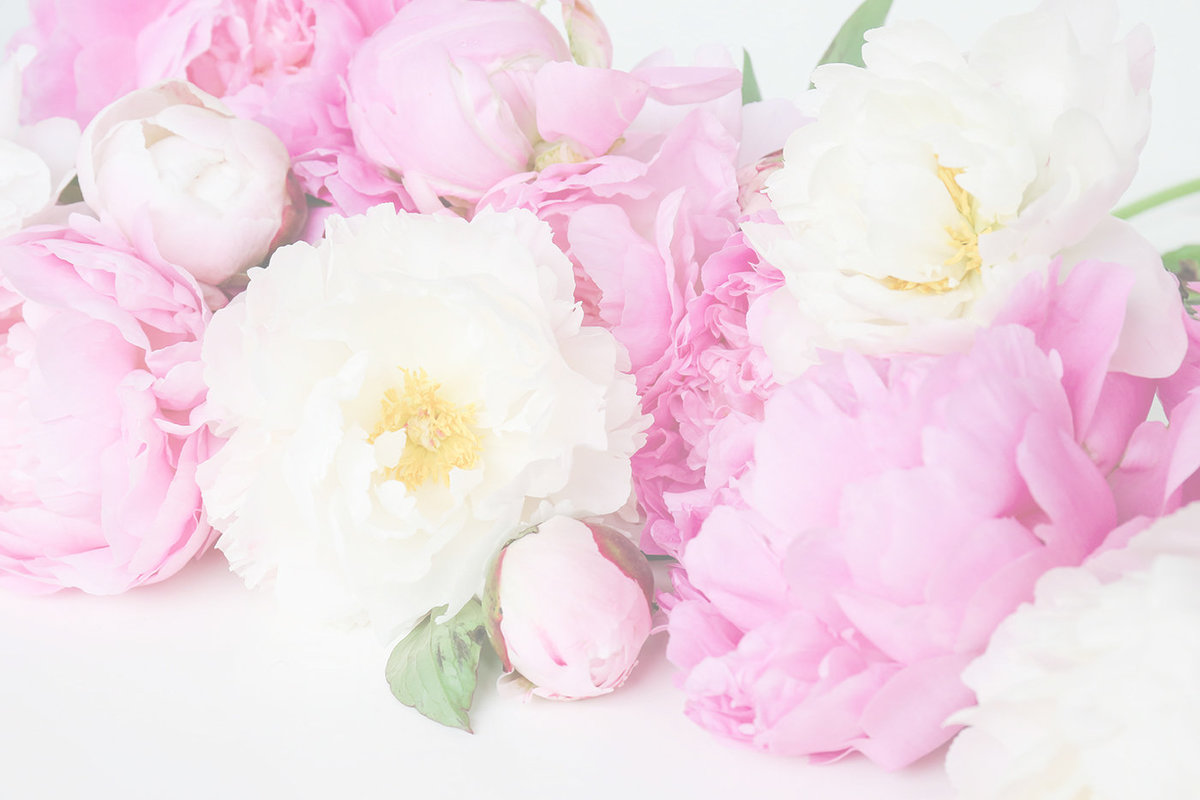 peonies stock wallpaper