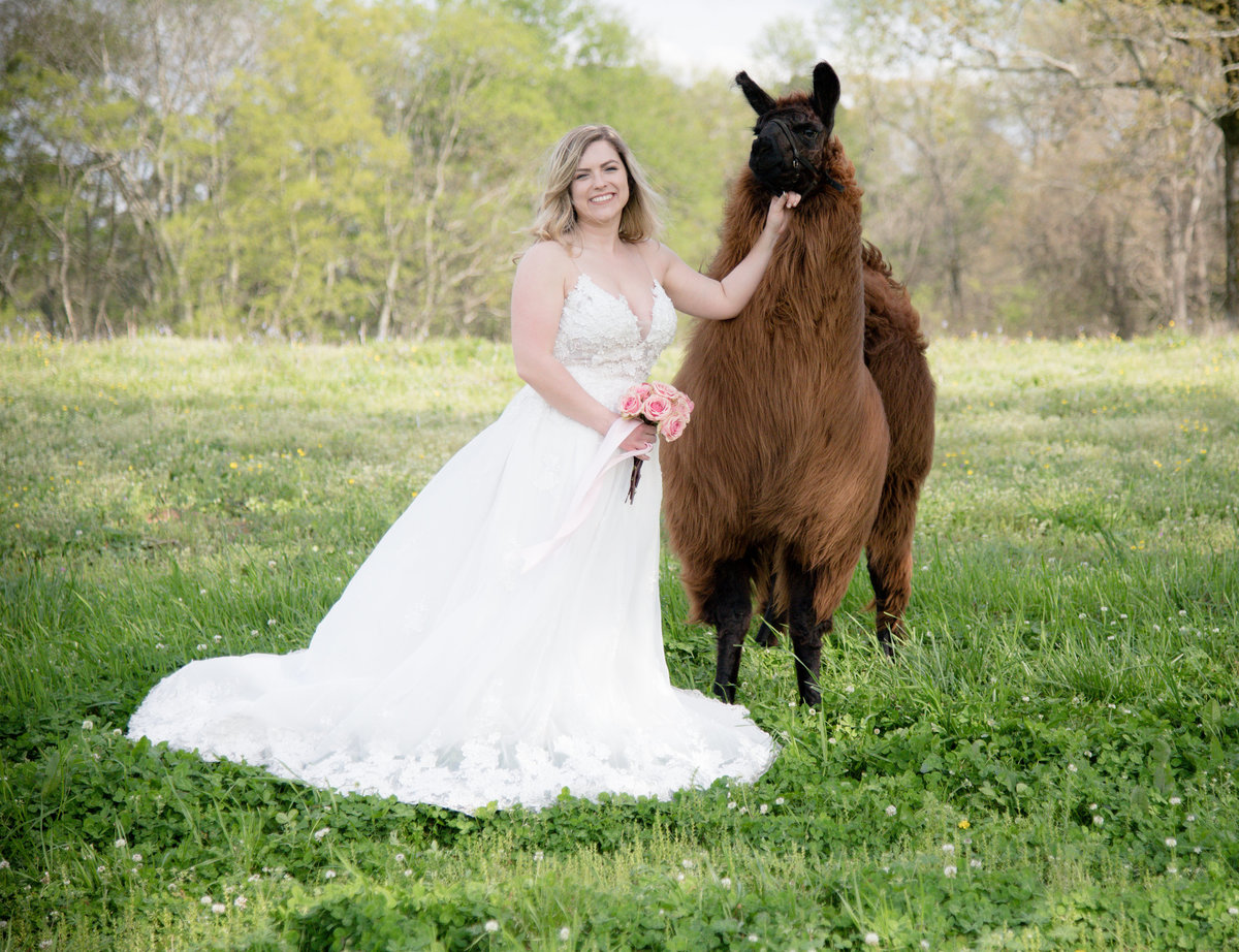llama, bridal sessions, destination bridal sessions