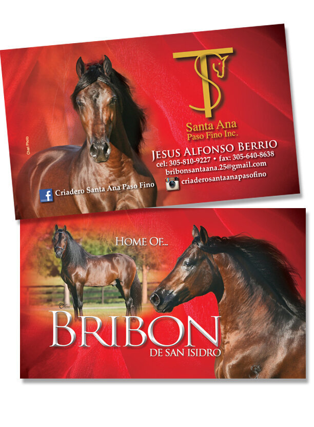 horse farm stallion business card graphic design