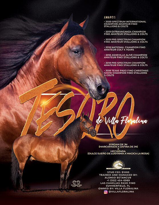 stud marketing stallion ad