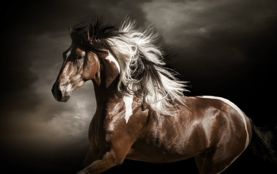 stunning-steeds-photo-pintador-de-gasparilla