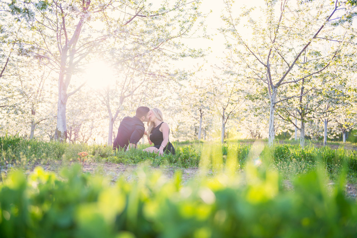 northern michigan engagement photographers in cherry blossom portraits