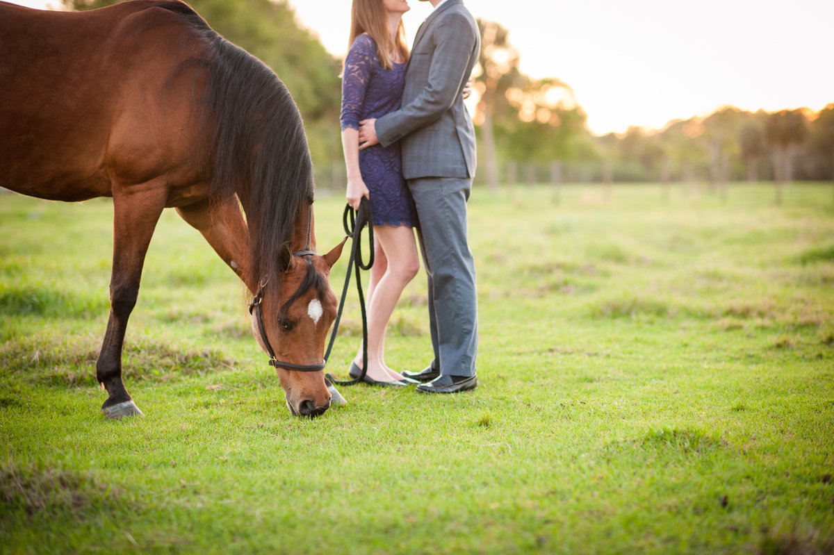 Equine Photography New Smyrna Beach