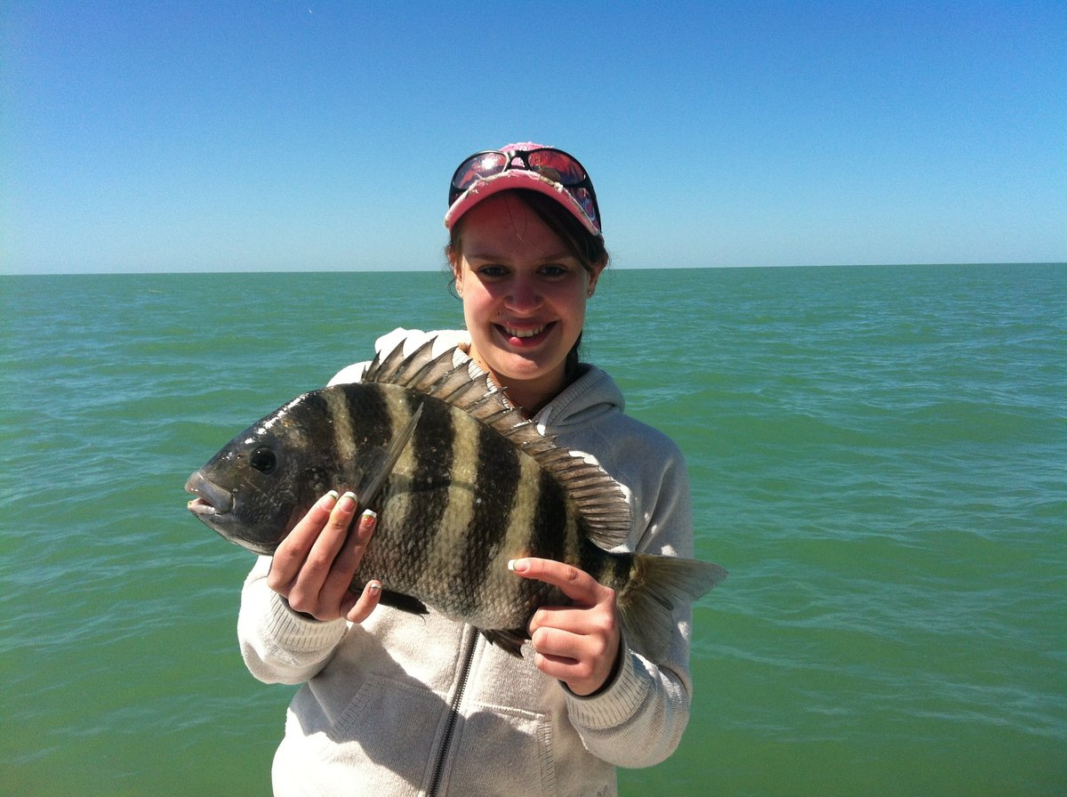 sheepshead fish photo