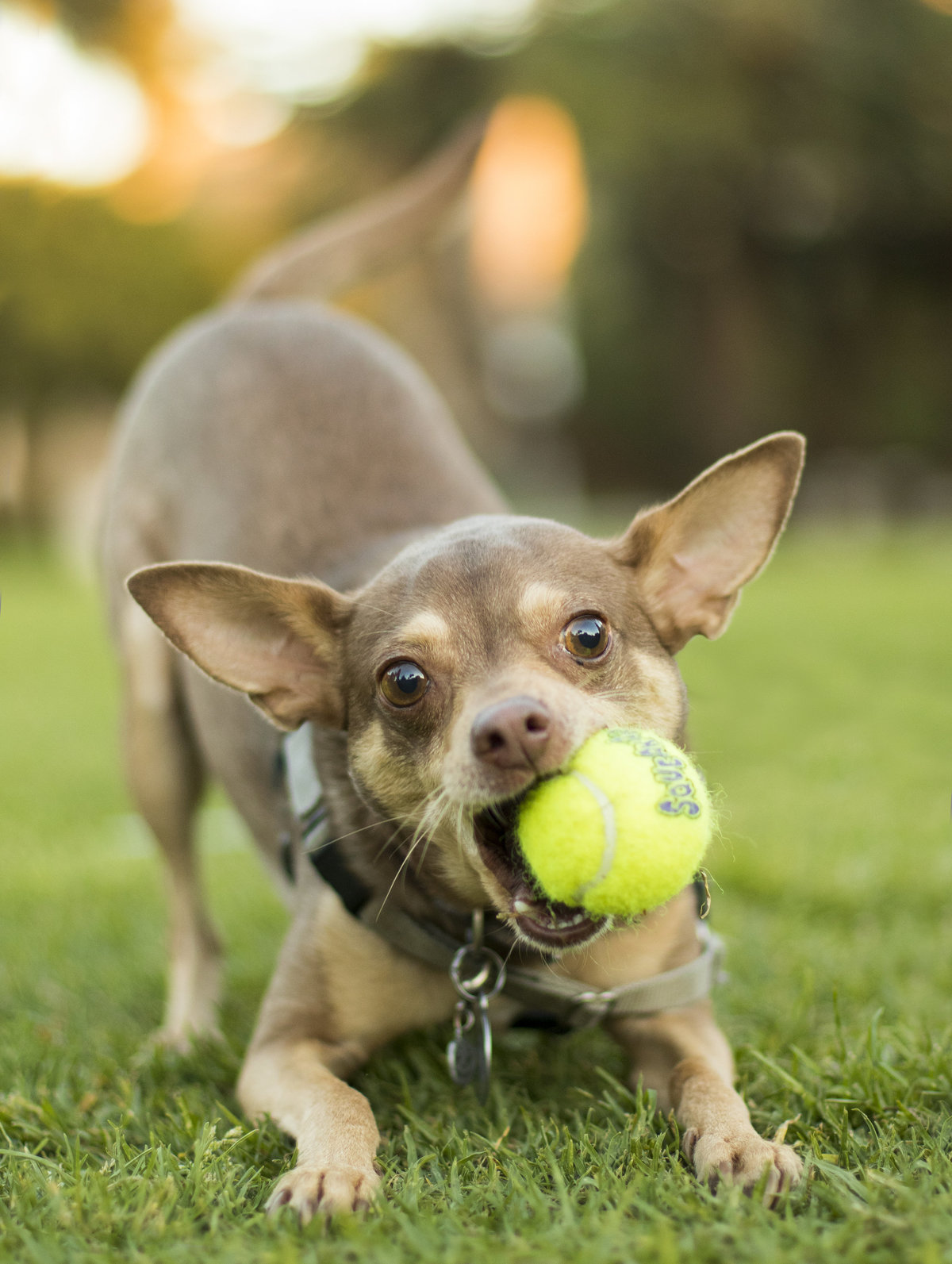 dog photographer san diego 3