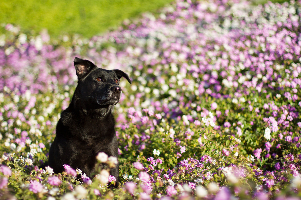 Cute dog in flowers photo