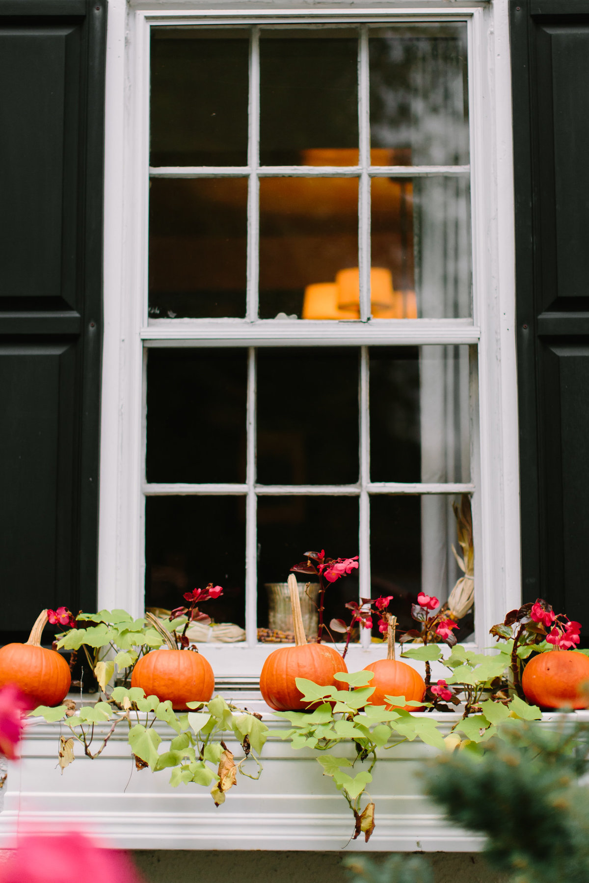 window decor with pumpkins