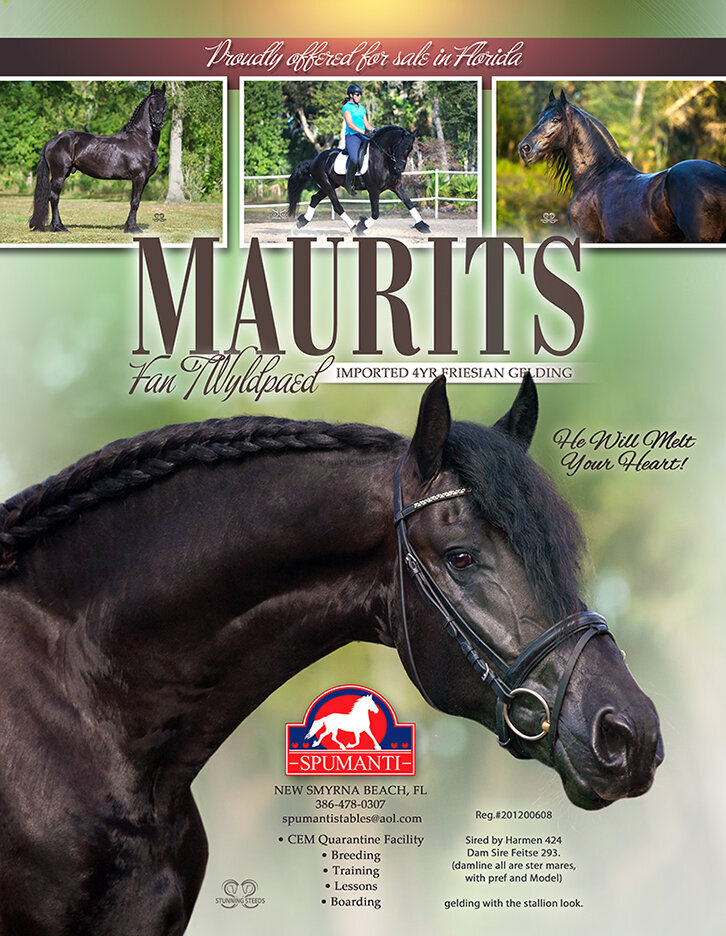 magazine ad design friesian stallion horse