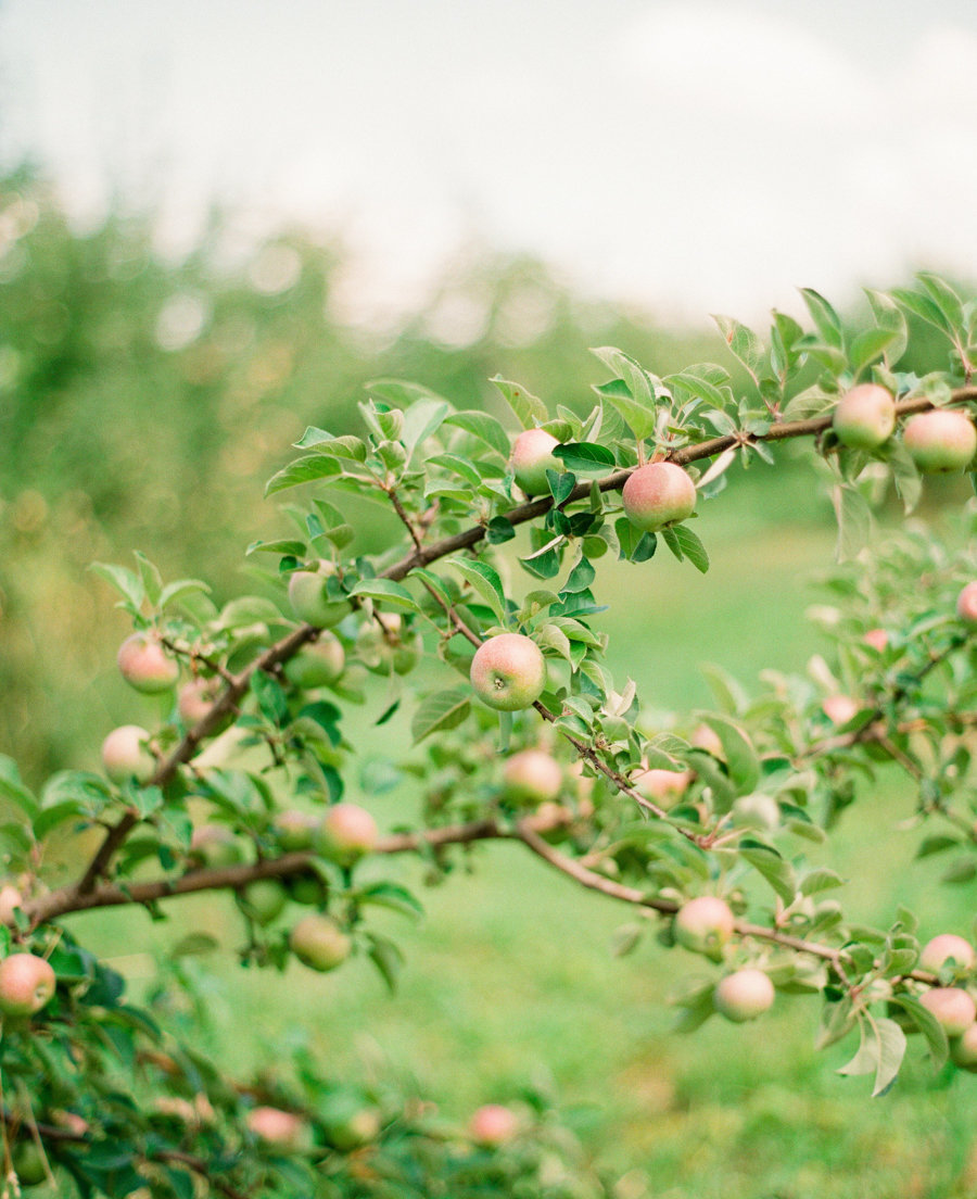 Apple-Orchard-Engagement-Lindsay-Madden-Photography-01