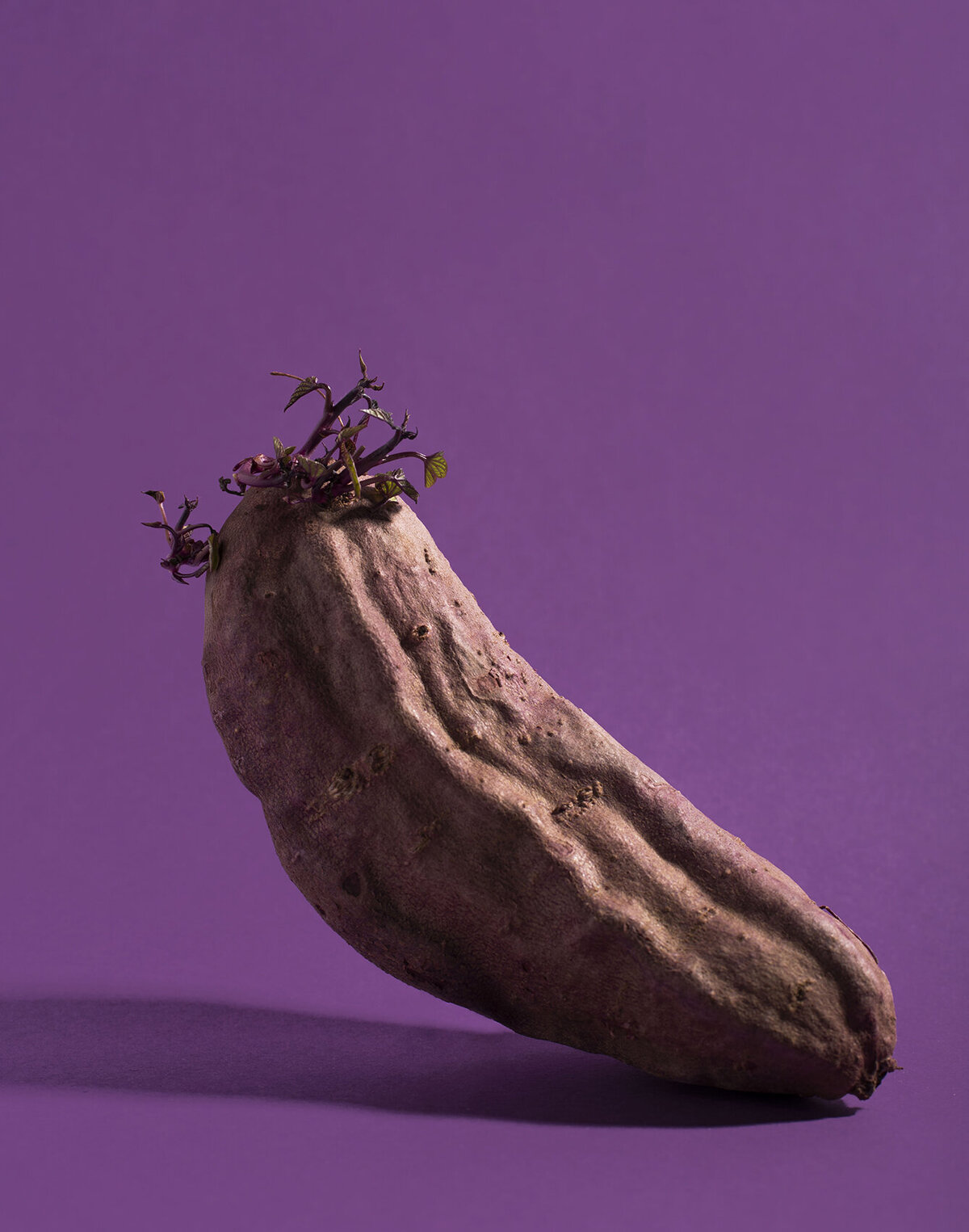 los angeles food photographer produce photography purple sweet potatoes