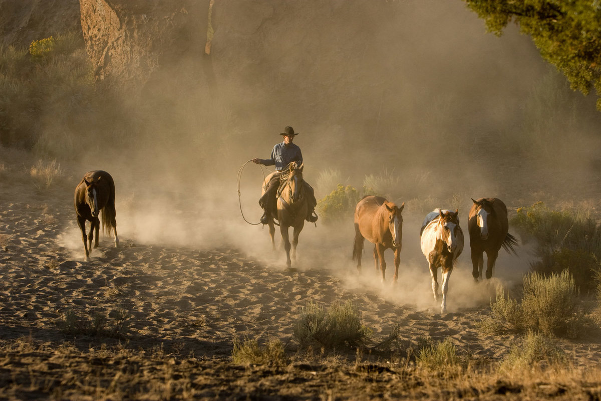 sunrise horses cowboy and dust photographer  Lynette Smith Photography