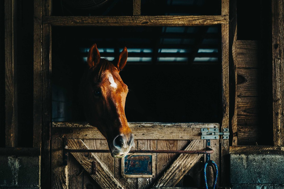 Horse-Photography-Pet-photographers-in-Charleston-SC-Fia-Forever-Photography-761A4430-Sig-6036