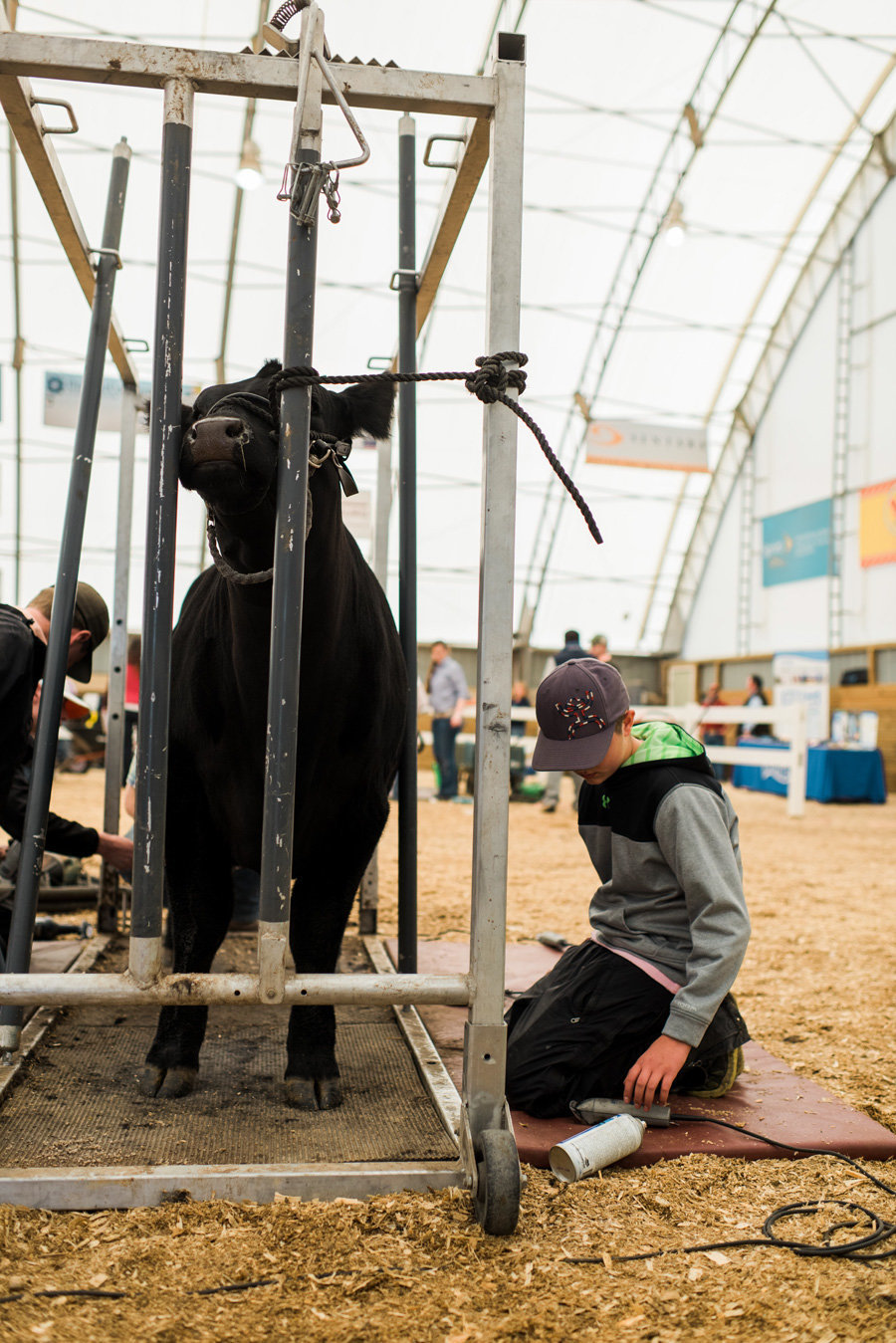 Virginia-Livestock-Photographer-Beef-Expo