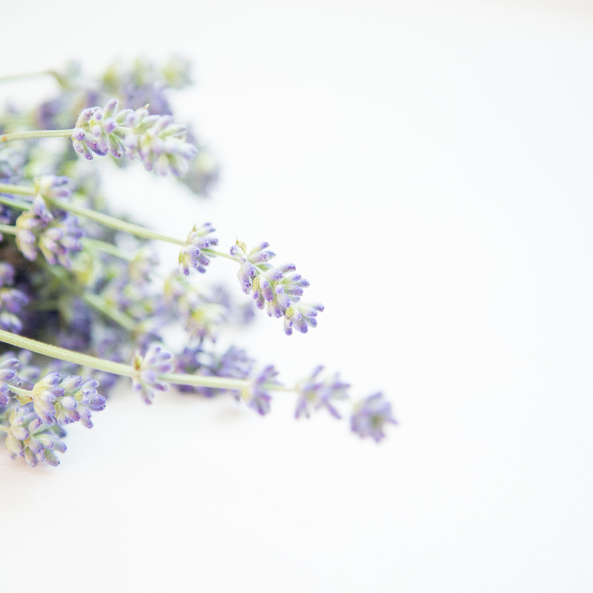 Delight Instagram-Lavender-0005