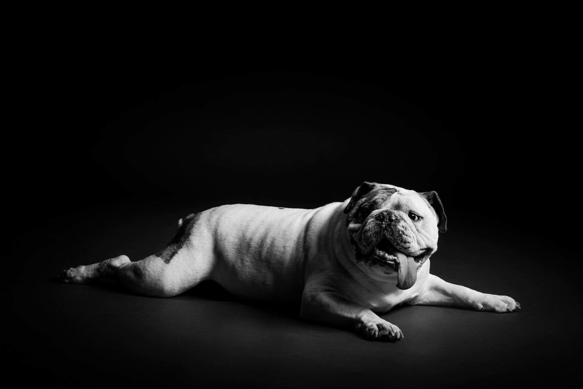 Fun-pet-portrait-photography-by-King-and-Fields-Studios-Charleston-SC