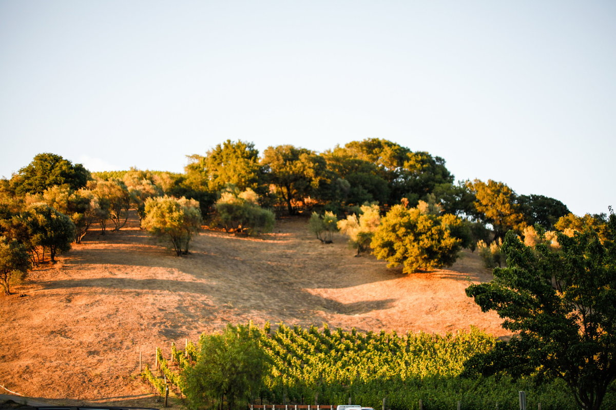 corporate-photography-napa-odette-winery-22