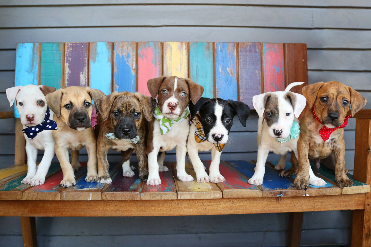 Peanut Pups group pic
