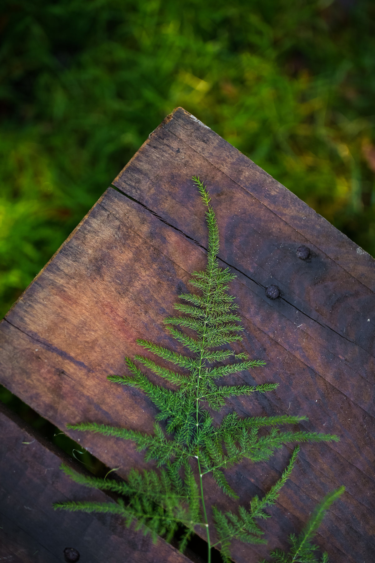 greenery on wood