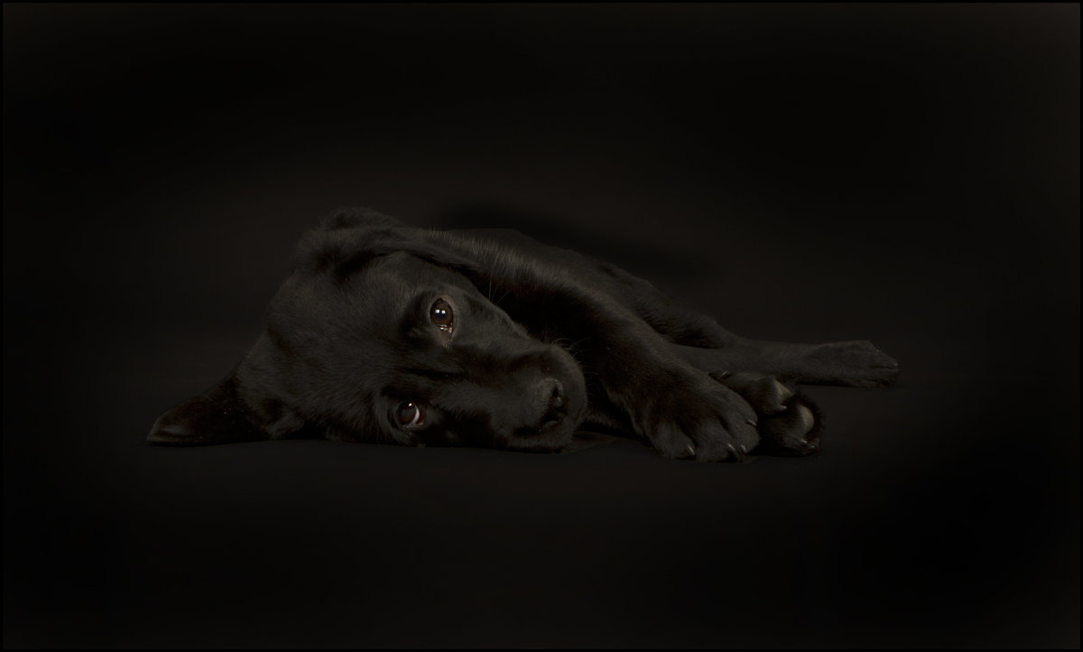 best studio pet photography 4