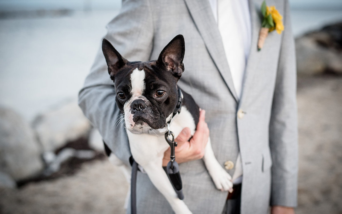 French Bulldog - Lands End, New York - Imagine Studios Photography - Wedding Photographer