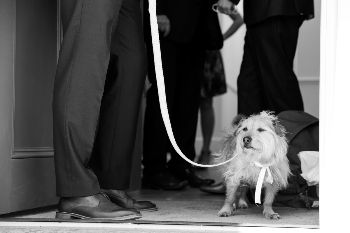 dogs at weddings in devon
