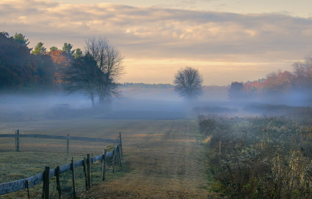 foggy english field