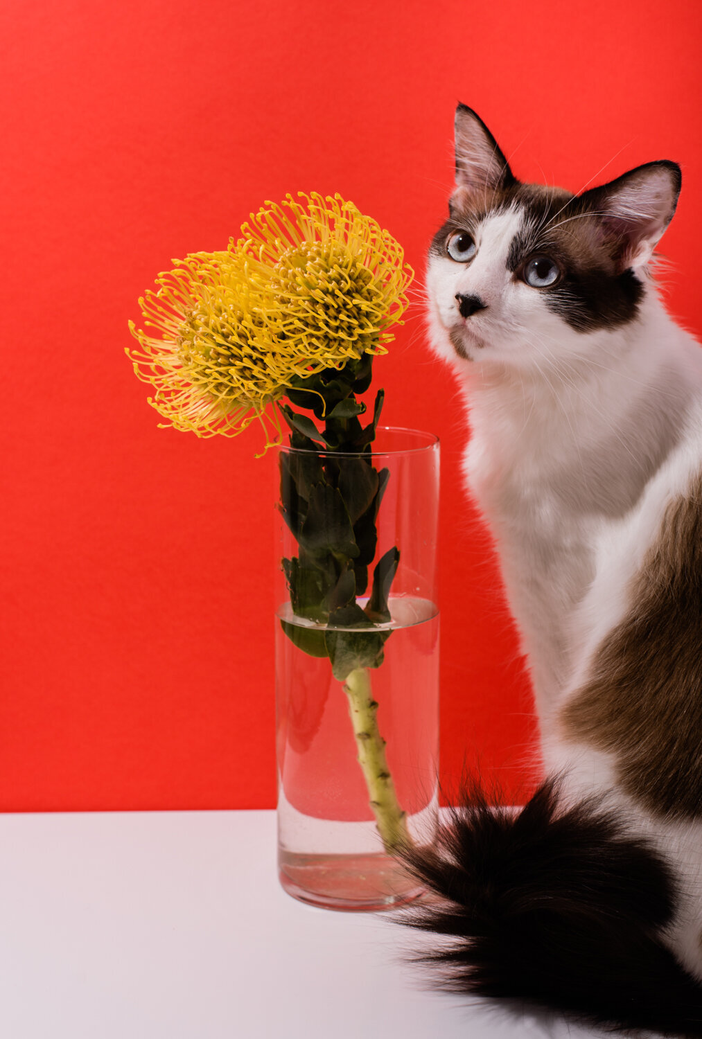 los-angeles-product-photographer-lindsay-kreighbaum-cat-still-life-floral-2-2