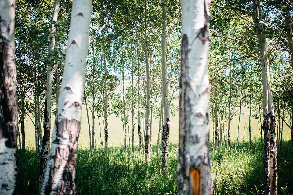 Strawberry-Creek-Ranch-Modern-Minimalist-Outdoor-wedding-in-Granby-Colorado-Aspen-Forest