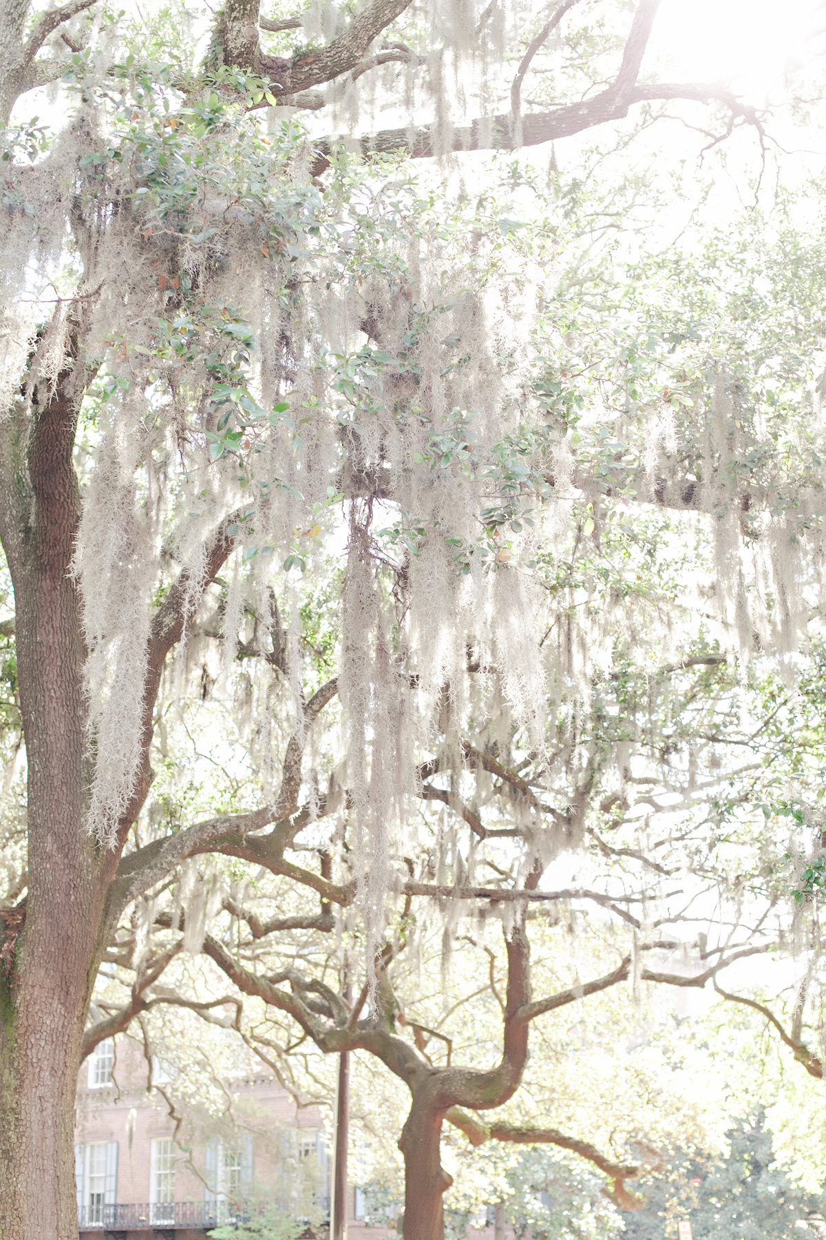 Savannah Oglethorpe Square Spring Wedding