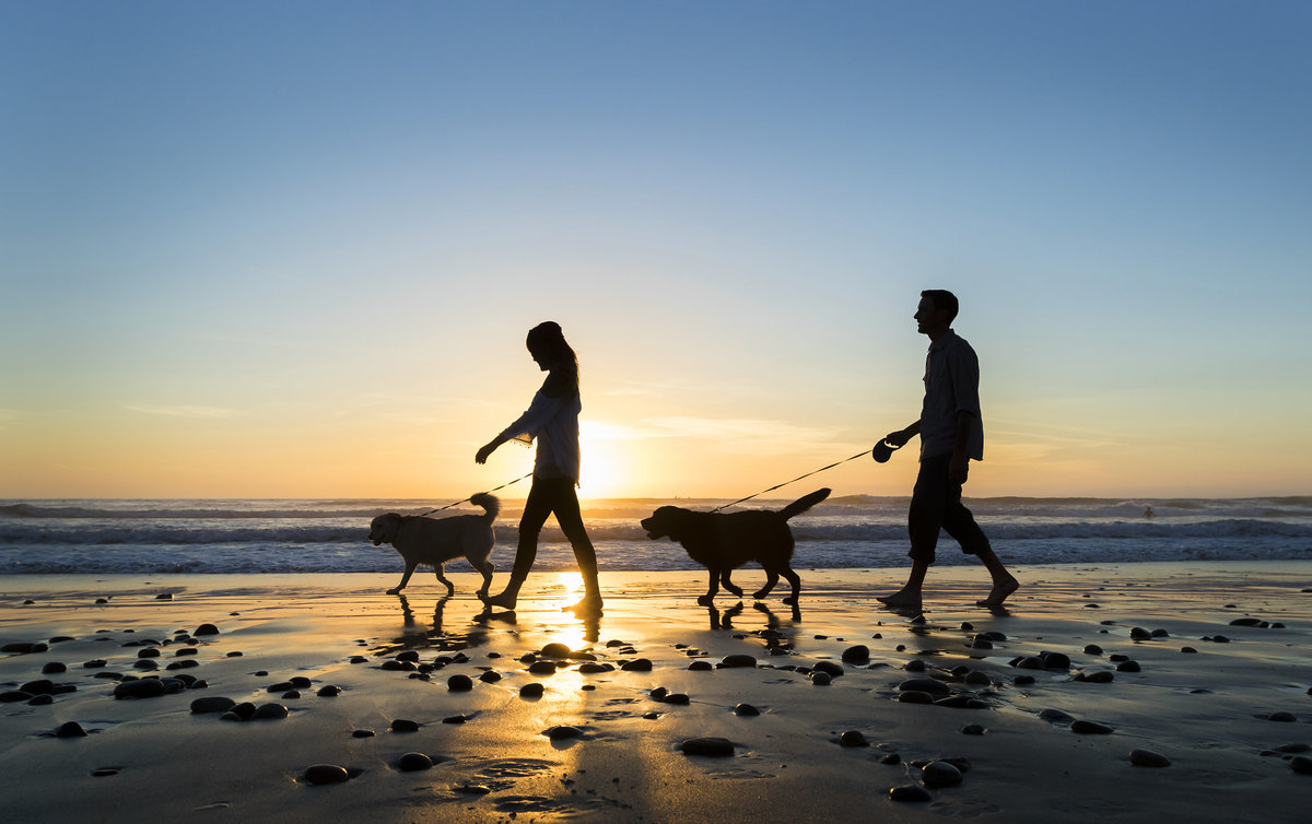 great_san_diego_dog_family