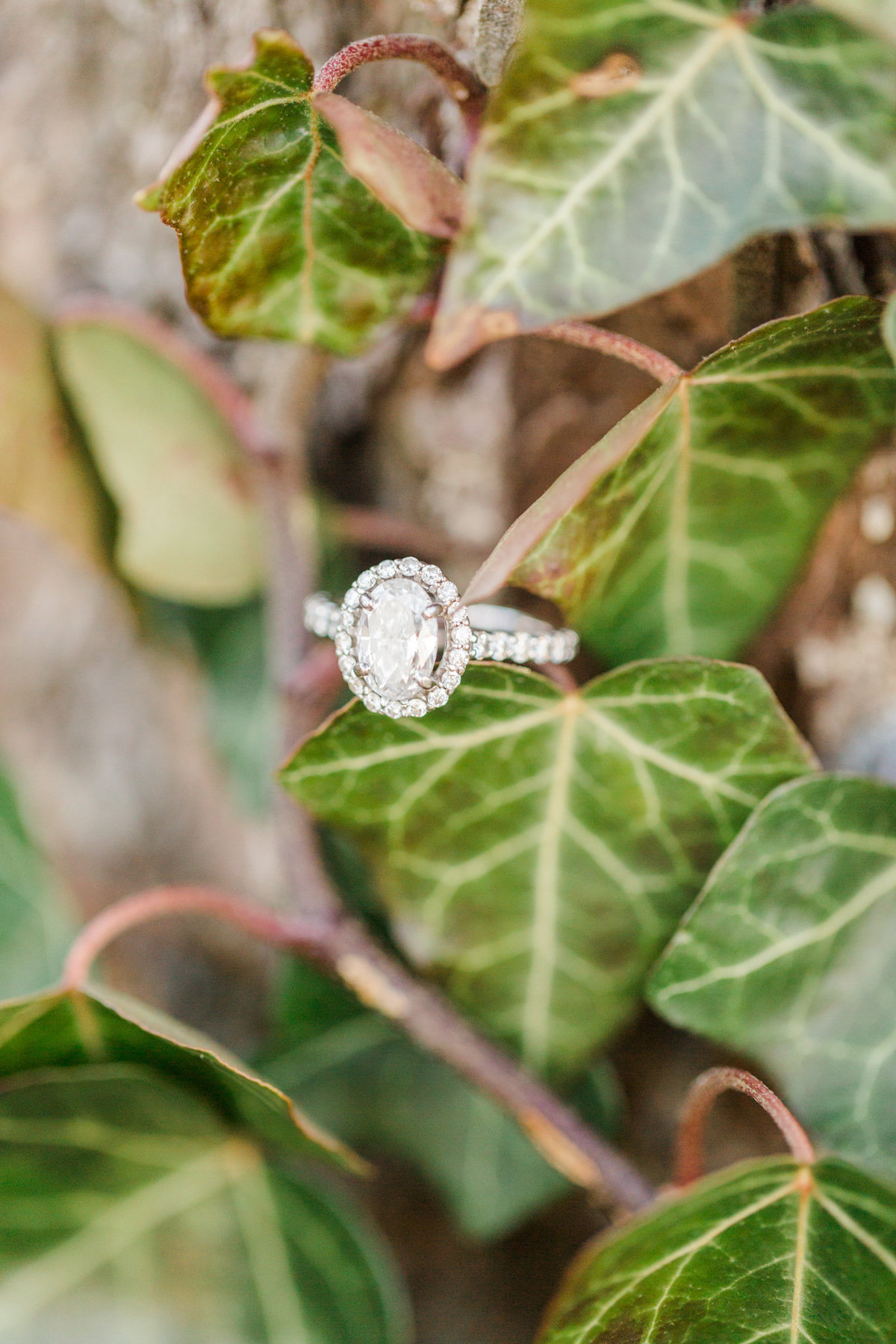 Sweet-Southern-Picnic-Engagement-Ramsay-Estate-6267