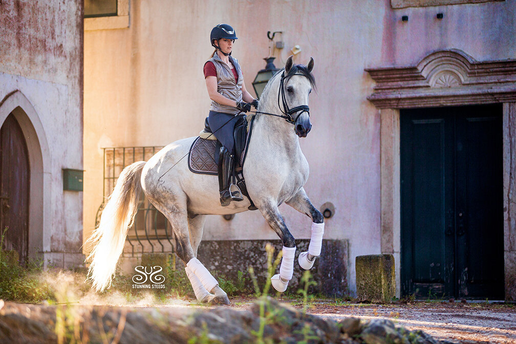 lusitano dressage horse stallion portugal