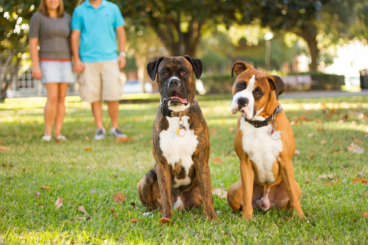 san_diego_dog_photographer_04