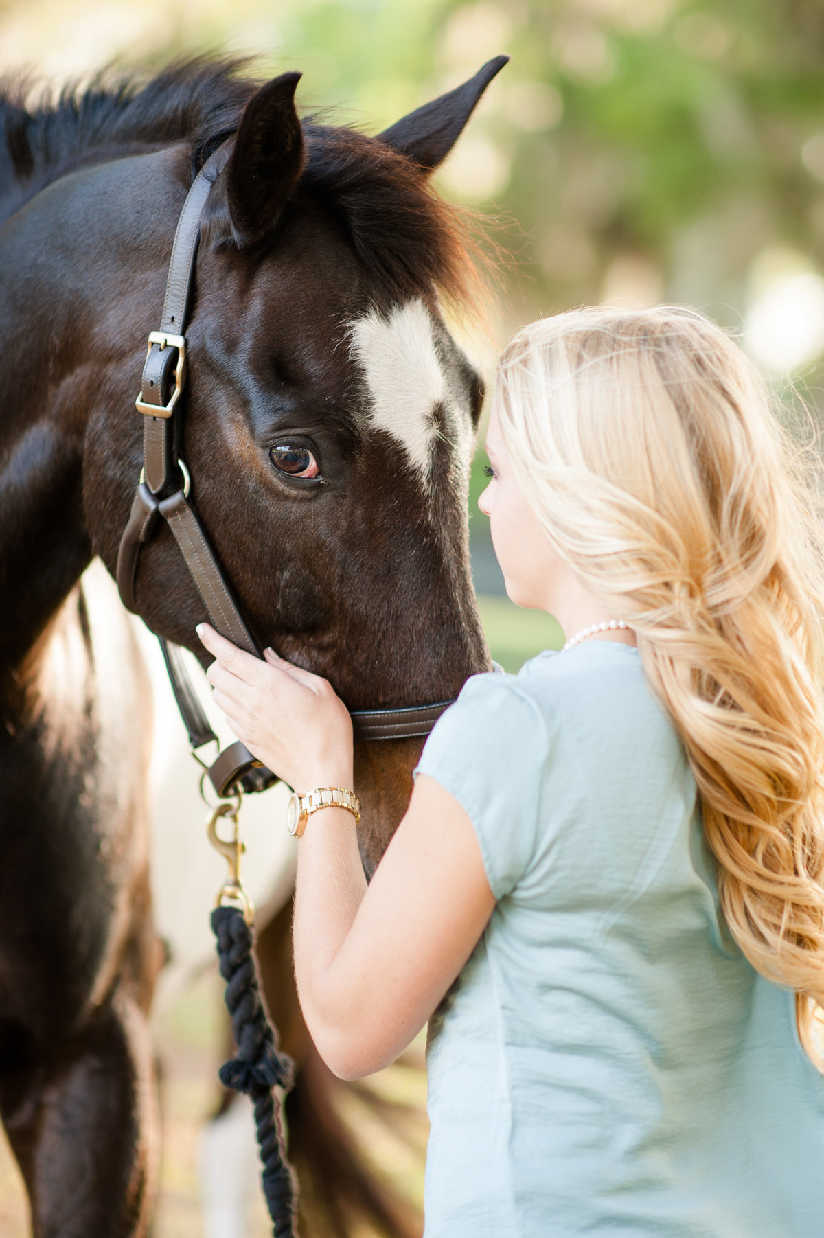 Horse Portraits Ormond Beach