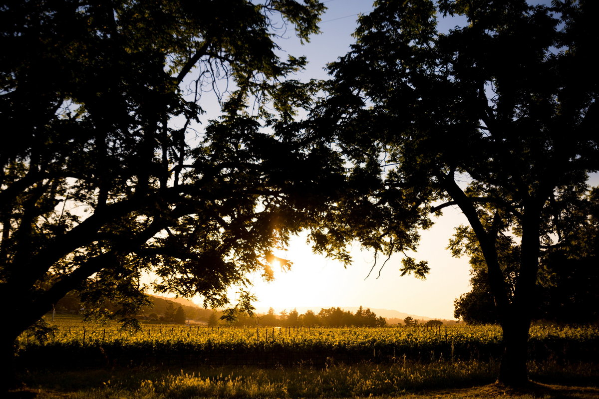 corporate-photography-napa-annadel-114