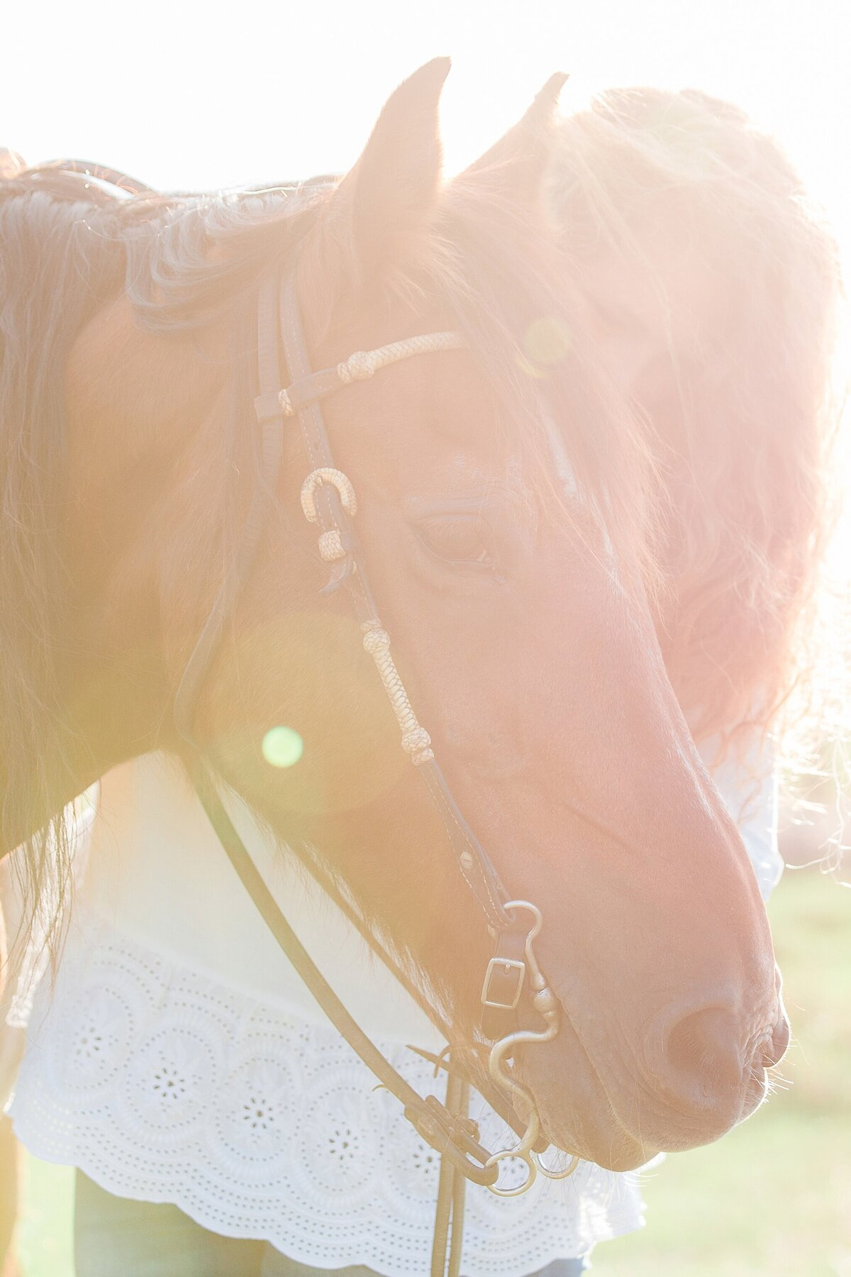portrait of a horse's head with her owner standing next to him at sunset