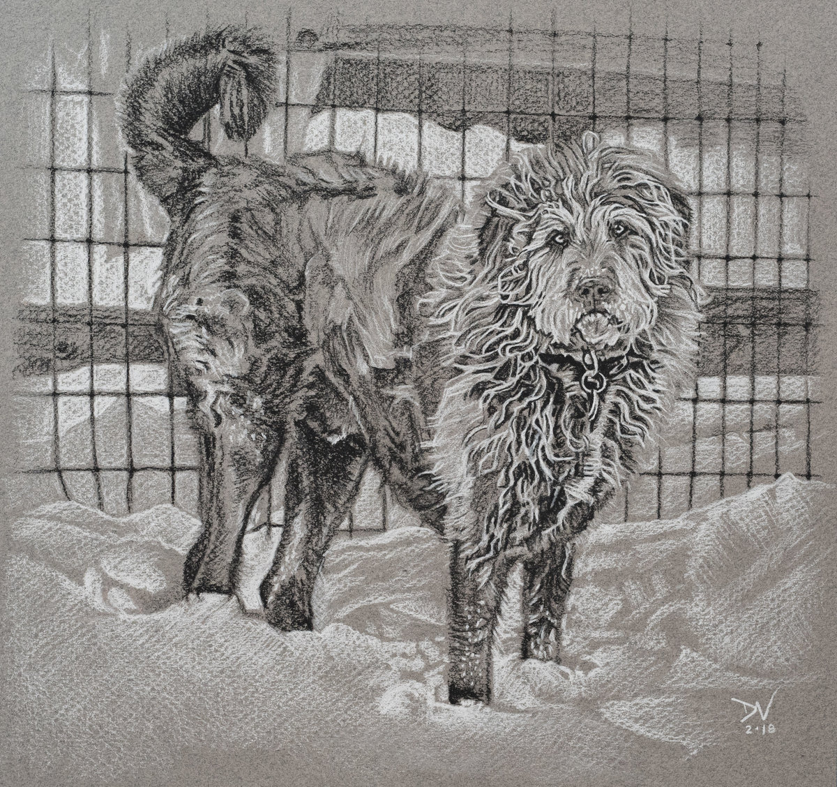 2018-02 Buddy Pup - 9.5X9 - charcoal on paper - SA