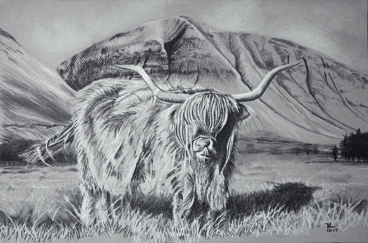 2007-12 Highland Cow - charcoal on grey paper-01-2
