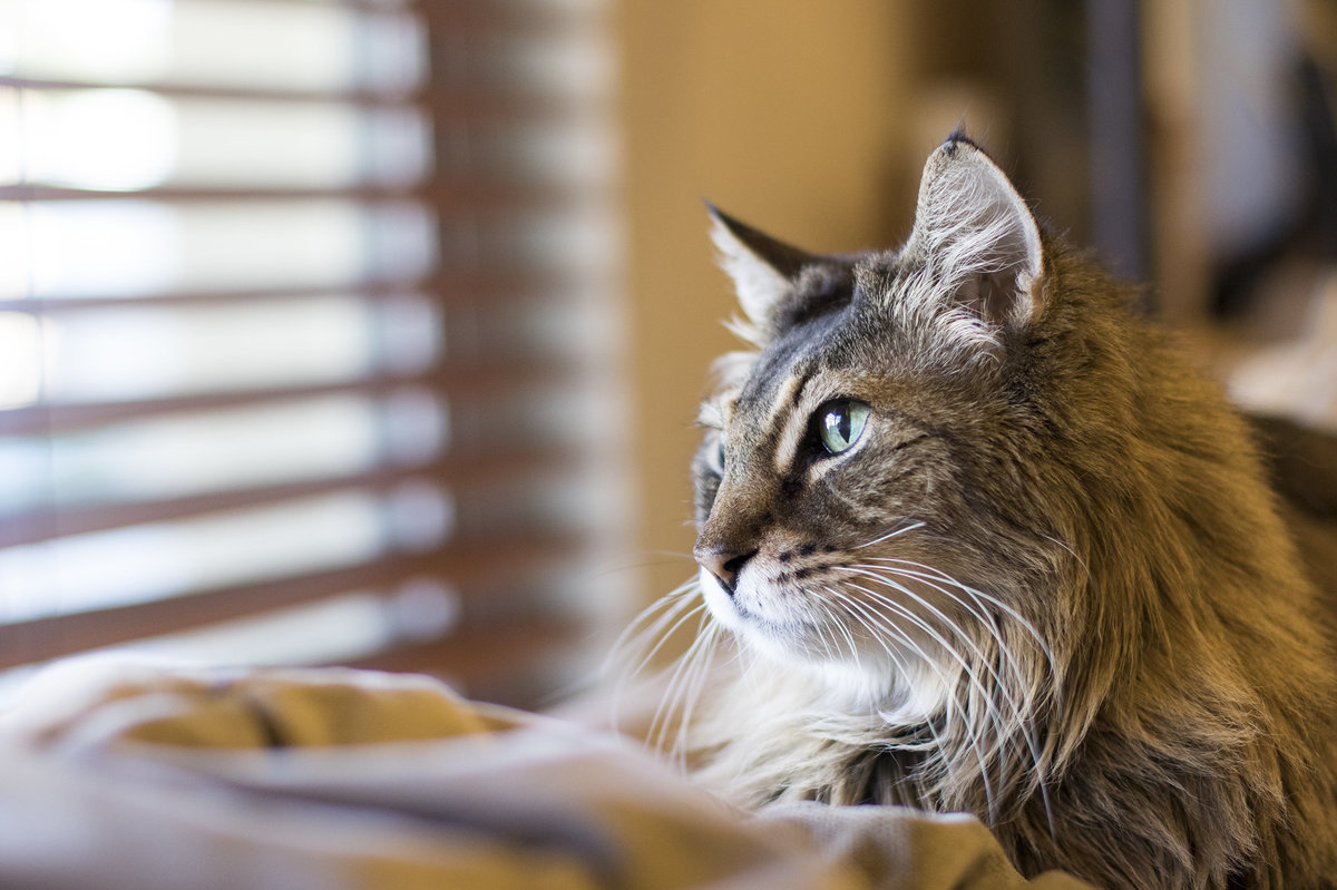 san_diego_cat_photographer_1