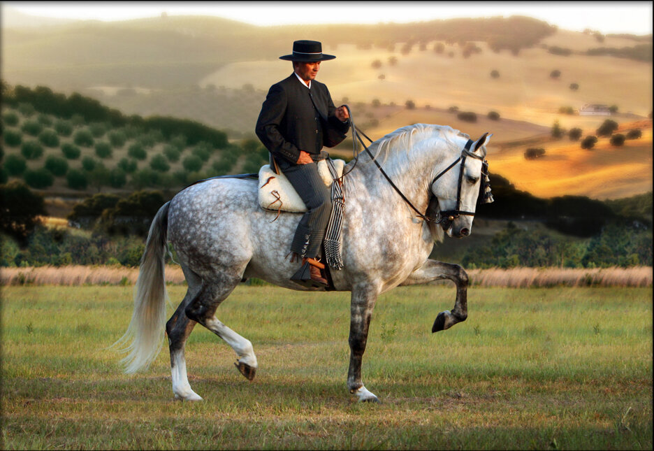 stunning-steeds-photo-gray-andalusian-stallion