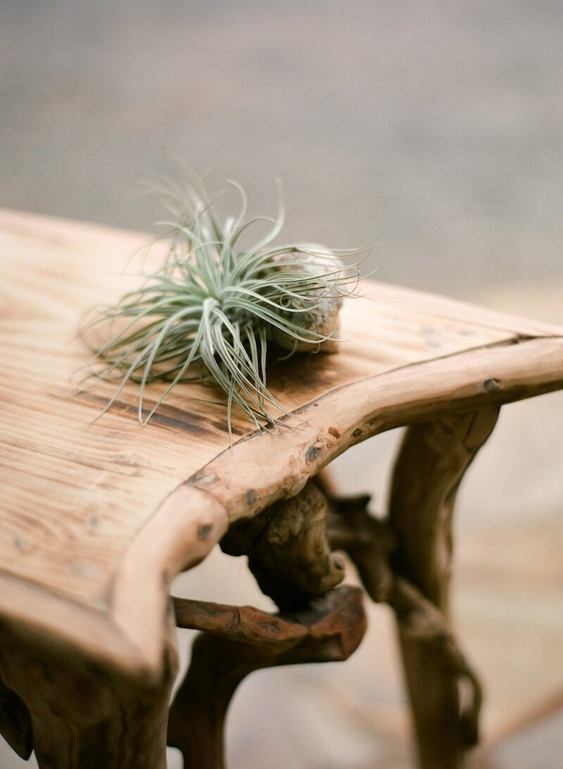 table with air plant