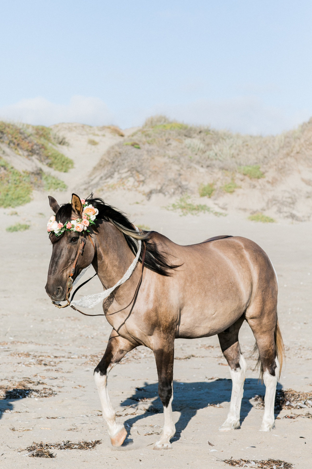 monterey_horse_beach_engagement_007
