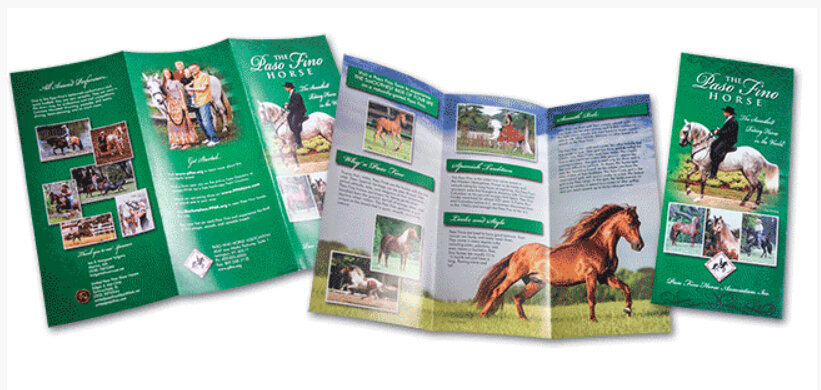 horse brochure ad design