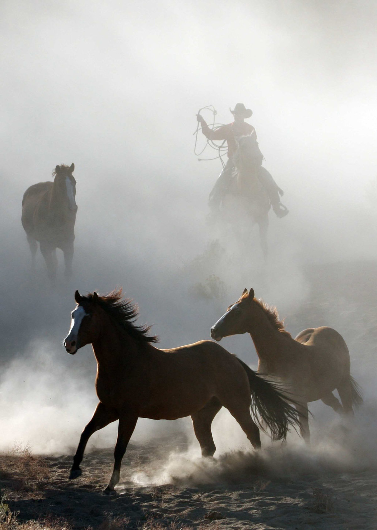 horses running in dust Lynette Smith Photography