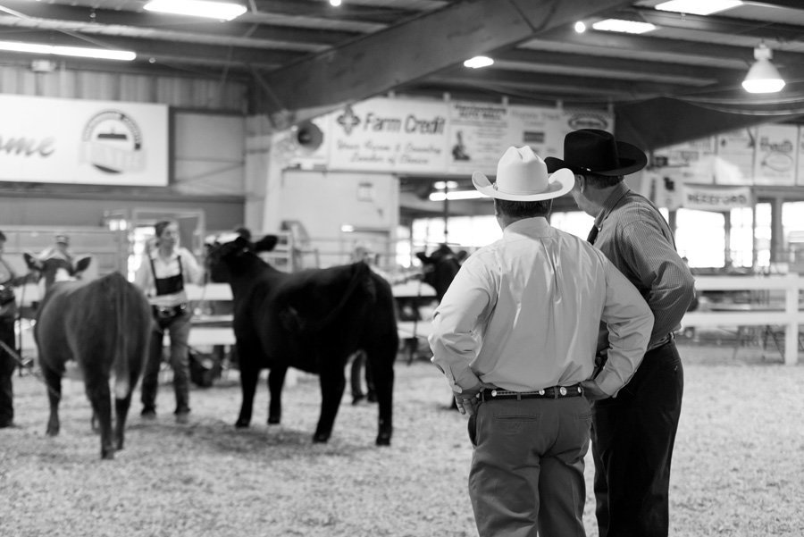 Virginia-Stock-Show-photographer (4)