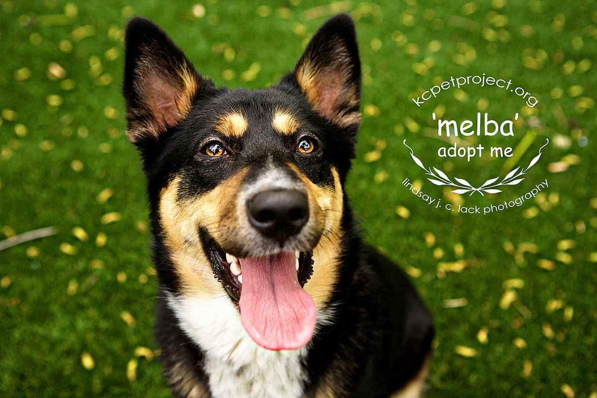 kansas city dog photographer