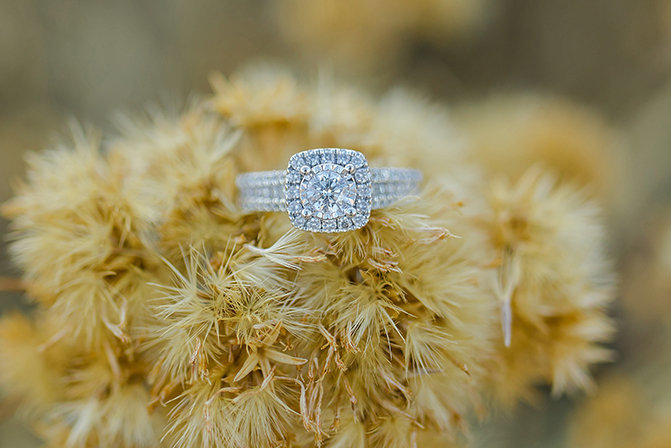 ring shot in dried flowers